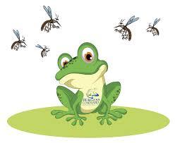 massachusetts pest control blog burgess pest management