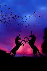 best 25 unicorn pictures ideas on unicorns pictures