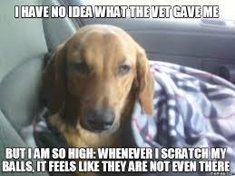 Dog At Vet Meme - dog at vet meme 28 images 14 priceless photos of dogs