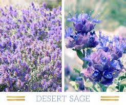 Blue And Purple Flowers 127 Stunning Desert Plants Ftd Com