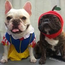 White Dog Halloween Costume French Bulldog Costume 10 Frenchie Halloween