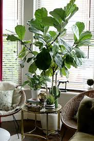 best 20 large plants ideas on pinterest u2014no signup required