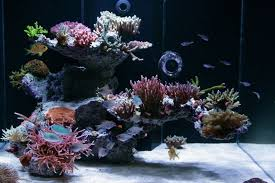Nature Aquascape Tips And Tricks On Creating Amazing Aquascapes Reef2reef