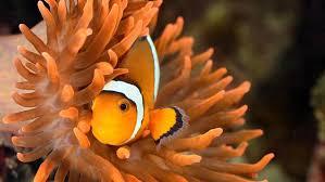 best black friday deals saltwater supplies vivid aquariums warehouse tropical fish store los angeles