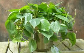 Office Plants Plant Low Maintenance Indoor Plants Stunning Names Of Indoor