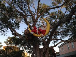 descubre el in a tree