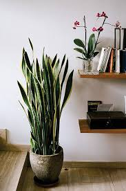 Modern Houseplants by 6 Houseplants That Will Survive Your Busy Schedule The Accent