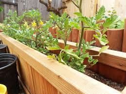 hochbeet balkon hochbeet balkon selber bauen holz bepflanzen tomaten gemuese