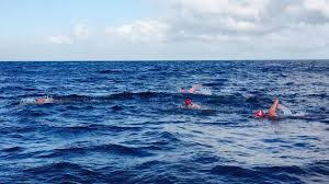 Georgia Wild Swimming images Strait of gibraltar crossing jpg