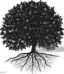 Oak Tree Drawing Black Silhouette Of Oak Tree With Leaves And Visible Roots Vector