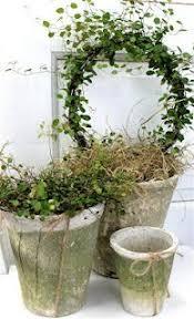 Indoor Garden Containers - lejonkruka i myrten i zetas trädgård garden topiaries