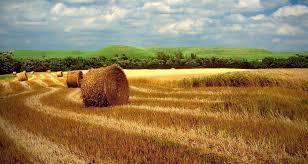 Kansas landscapes images Entitled hayfield in the kansas flint hills jpg