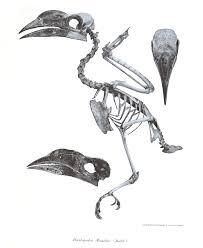 luzon hornbill penelopides manillae hotspot birding