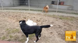 Tierheim Baden Baden Süßer Tierheim Hund Will Spielen Youtube