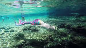 Florida wild swimming images Mermaids mermen swim wild in natural florida spring spotted by jpg