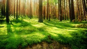 a guide to gradient boosted trees with xgboost in python u2013 jesse