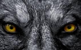 who s afraid of the big bad wolf wonderopolis