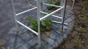 cucumber trellis with pvc pipe antireliant com