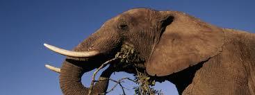 Krach Leadership Center Room Reservation Elephant Species Wwf