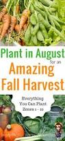 10 Vegetables U0026 Herbs You by 11 Vegetables You Can Start In August For A Full Fall Harvest