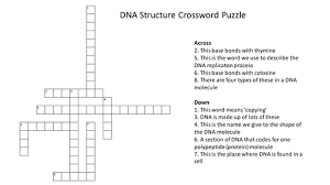 dna structure crossword puzzle with answers by