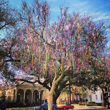 mardi gras trees mardi gras trees were in bloom center for environmental