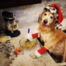 thanksgiving pictures for facebook cover golden retriever bailey home facebook