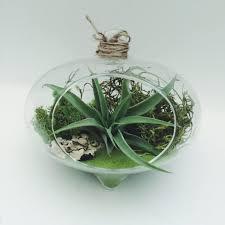 hanging green hearth air plant moss glass terrarium kit terrarium
