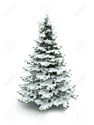 spruce tree christmas tree covered with snow isolated on a