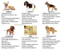Doge Meme Tumblr - mod shiba tumblr