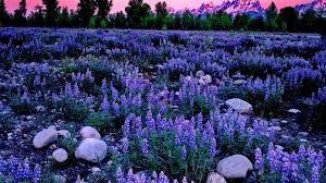 Pretty Blue Wallpapers by Field Flowers Pretty Clouds Blue Summer Delight Meadow Field