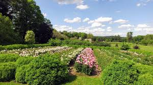 Garden Planning 101 My Mother My Herbaceous Peony Garden The Martha Stewart Blog