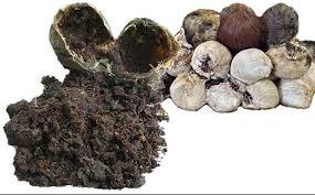 Minyak Wangi Kasturi minyak wangi kasturi solusi atasi gangguan jin sihir info obat herbal