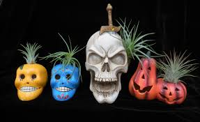 halloween vegetable skeleton it u0027s halloween time at rainforest flora rainforest flora