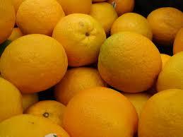 orange trees for sale at paradise nursery buy citrus trees