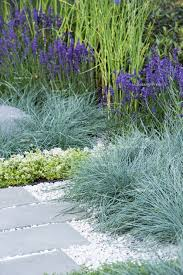 101 gardening secrets the professionals never tell fescue grass