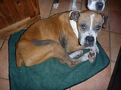boxer dog feet boxer has black armpits and groin and is itchy and smelly ask a vet