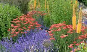 Summer Flower Garden Ideas - plant combination ideas plant family agastache hyssops