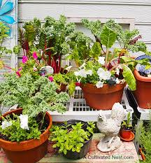 my container vegetable garden