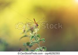 small dragonfly on green leaves with sunlight small stock