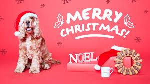 a christmas shopping guide for pet treats u0026 gifts