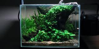 Aquascape Maintenance Top 5 Best Aquarium Plants For Aquascaping Aquatic Mag