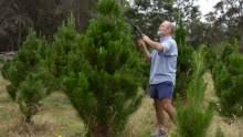 Brenda Lee Rockin Around The Christmas Tree Mp - the 10 worst christmas songs of all time abc news australian