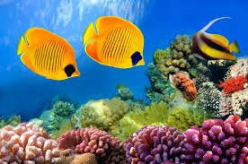 underrwater fishes coral reef tropical ocean underwater world fish