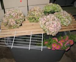 Bulk Hydrangeas Bulk Discount Flowers Hulk Green Mix Hydrangeas
