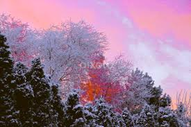 in the frosty tree tops trees bushes nature up
