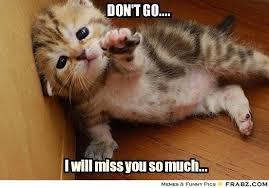 Cute Cat Meme Generator - don t go helpless kitten meme generator captionator