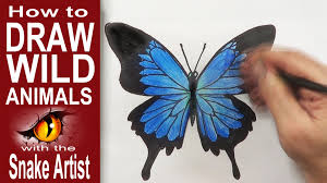 how to draw a butterfly beginner