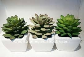 cute plant cute artificial desert plants buy artificial desert plants