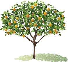 royalty free fruit tree clip vector images illustrations istock